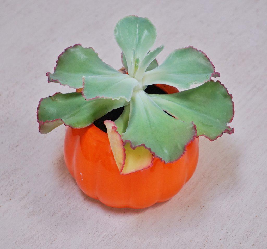 pumpkin leahs plate 1024x956 - Sunday Things... 11.1.15