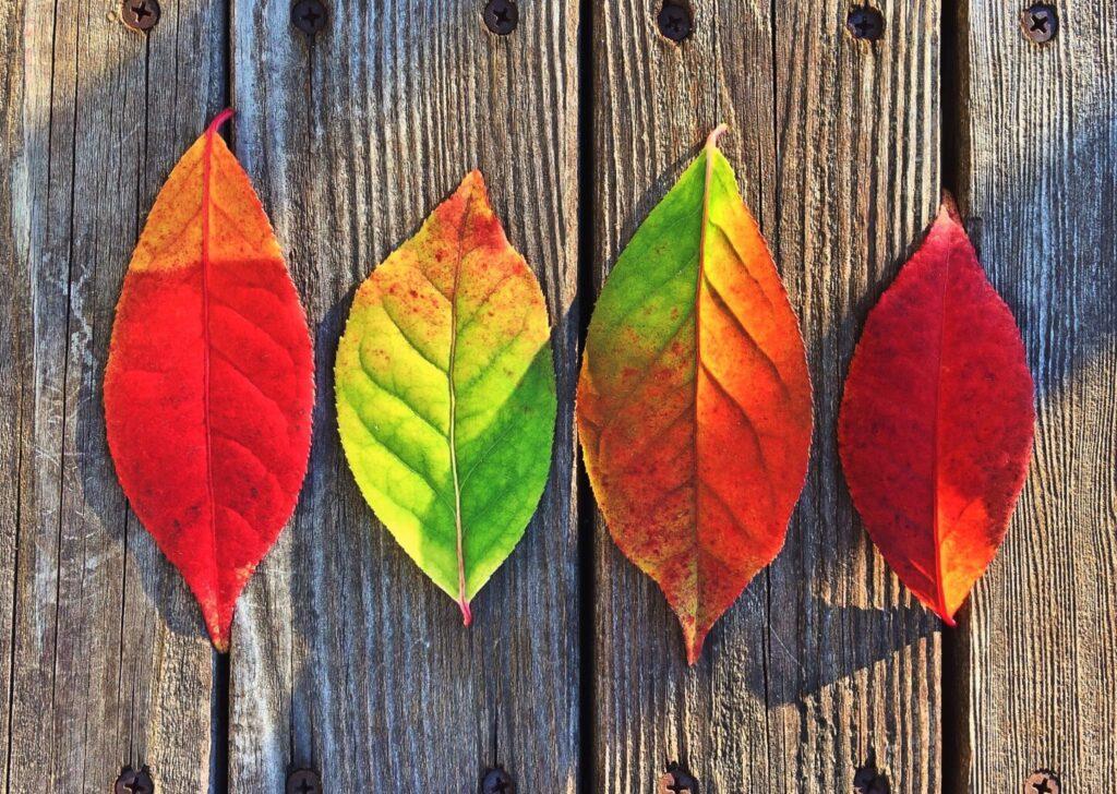 Why I love Fall